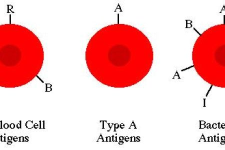 types of red blood cells » Path Decorations Pictures | Full Path ...