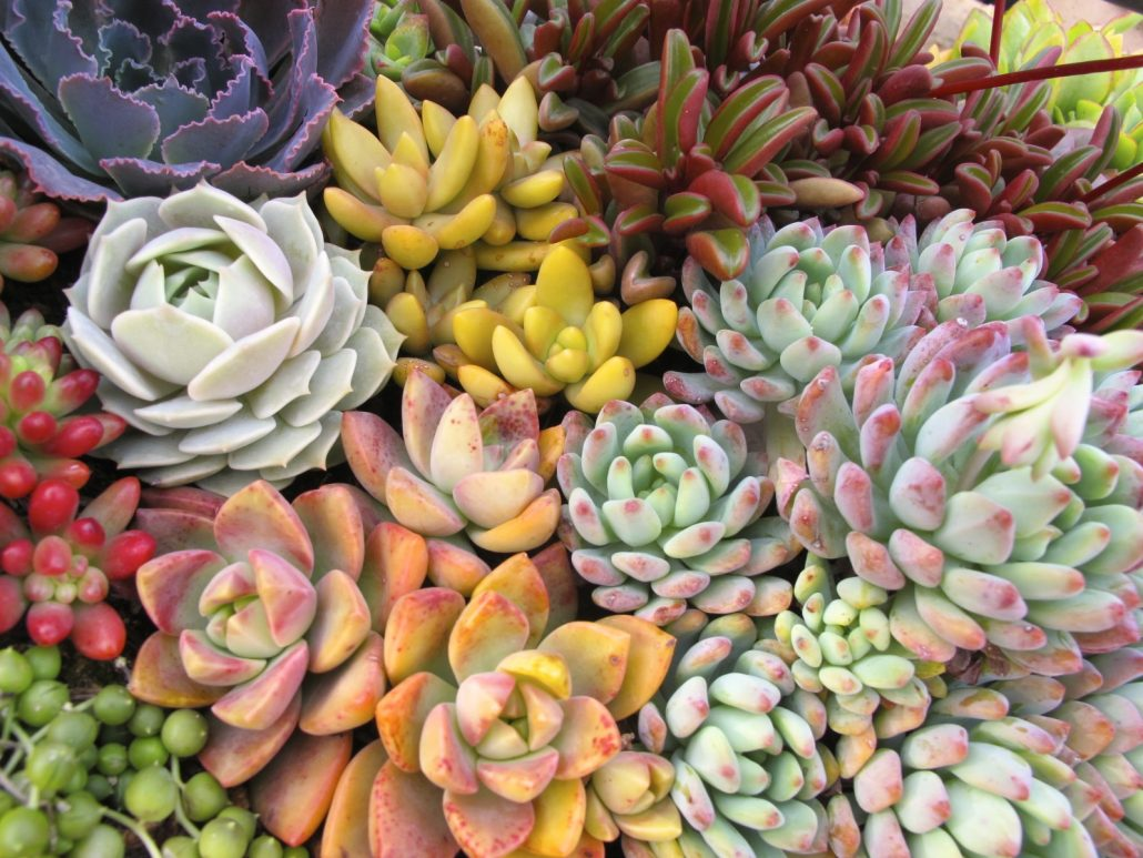 Mail Order Succulents