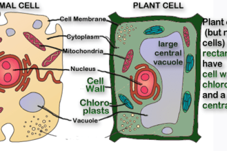 Animal and plant cell 4k pictures 4k pictures full hq wallpaper showme animal and plant cell pictures most viewed thumbnail animal plant cell venn diagram haci saecsa co animal labelled diagrams typical animal plant ccuart Gallery
