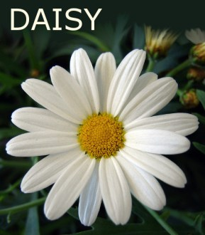 Not a Real Flower        Some Blog Site photo of a daisy