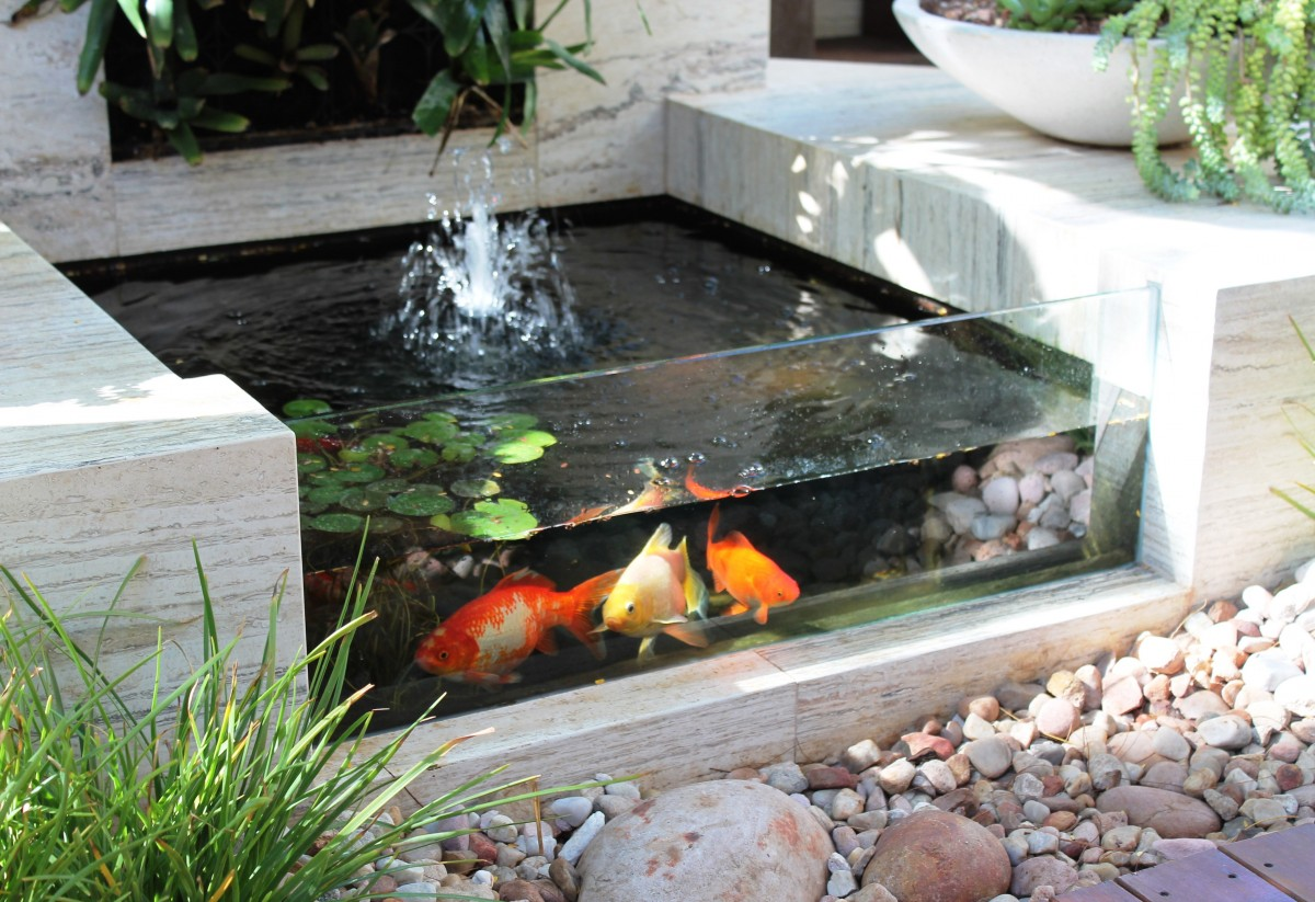 Backyard Pond Cost