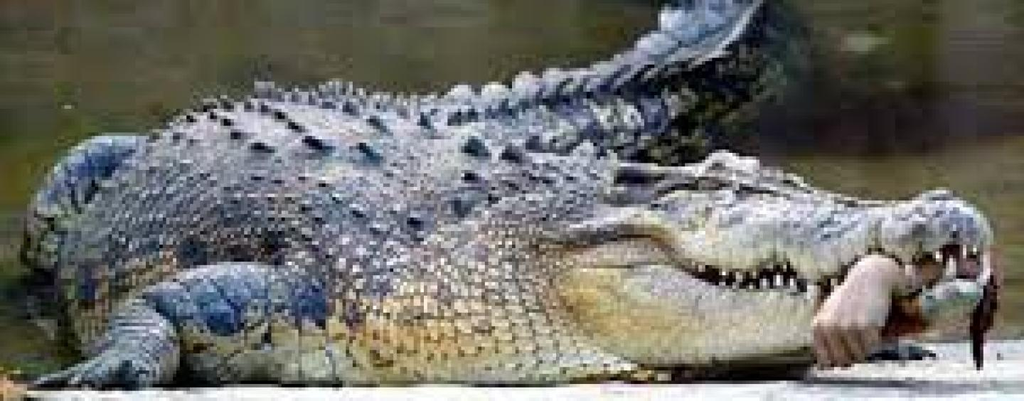Man Eaten Alive By Crocodile In Front Of His Family ...