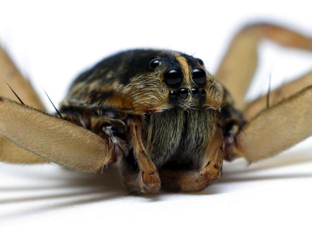 Spider Anatomy - Spider Facts and Information