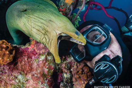 Free Resume Sample » scuba diving certification houston   Resume Sample