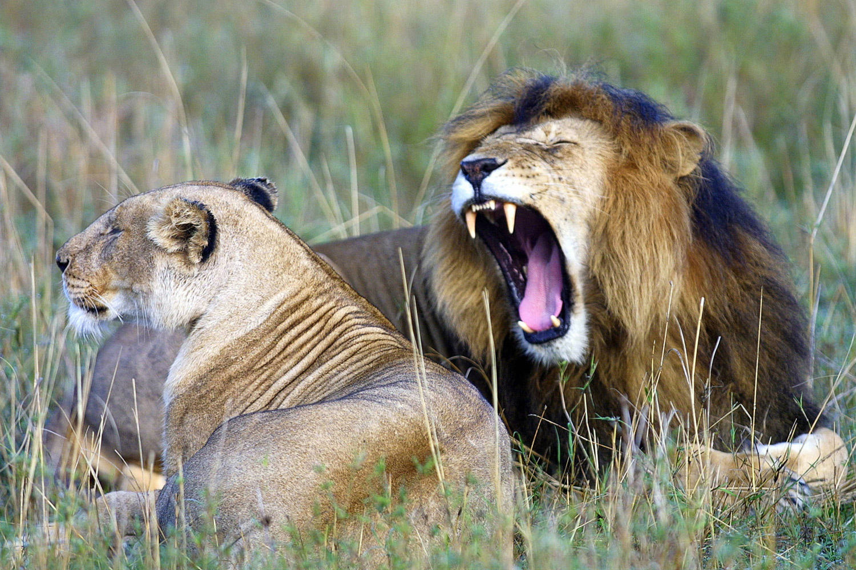 man eaten by lion - 1024×683
