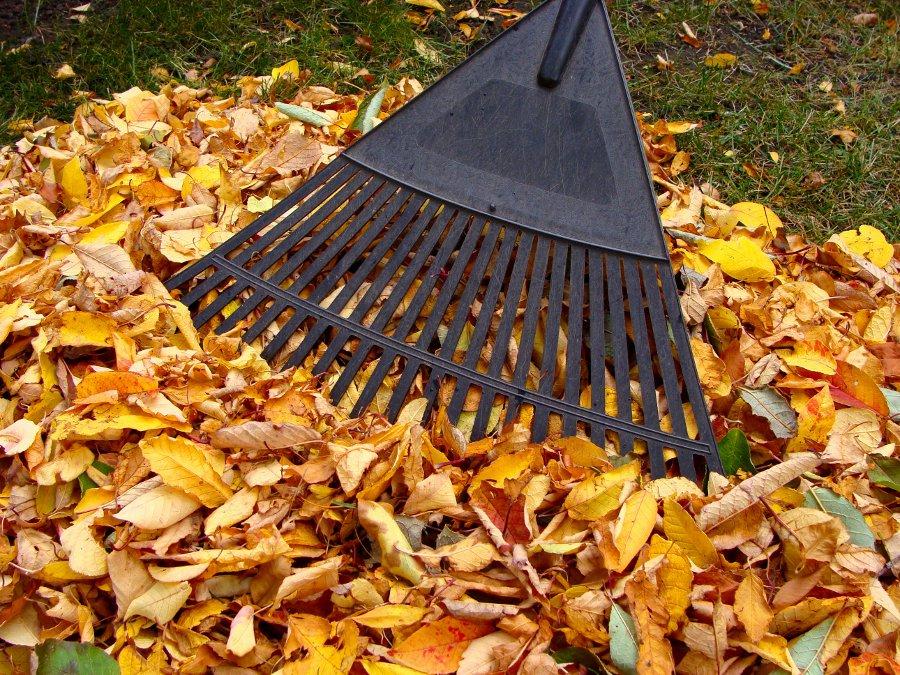 Easy Ways Rake Yard Leaves