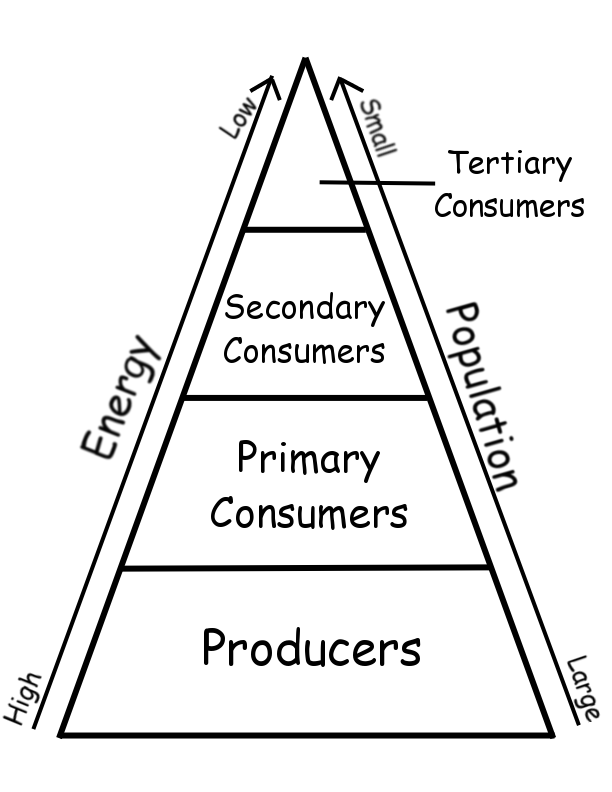 Relationship Between Consumers And Producers