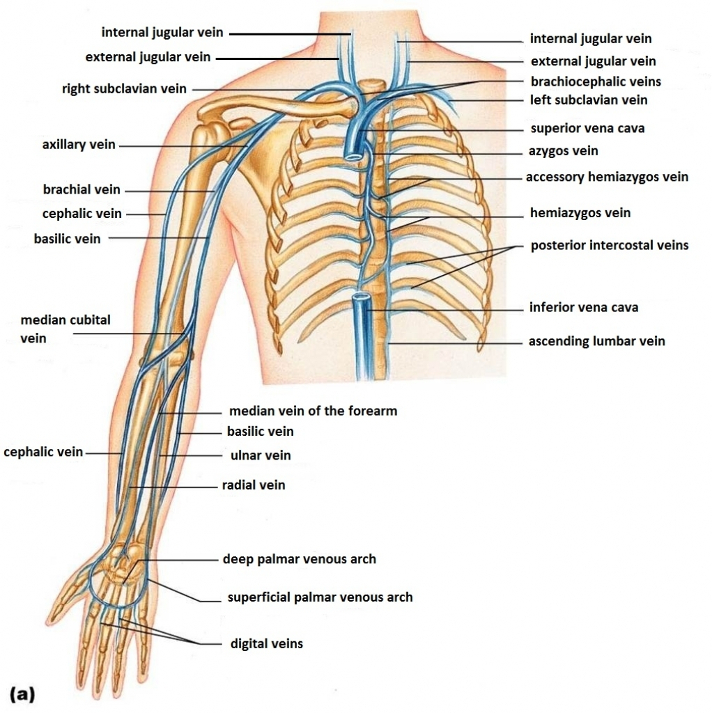 Types Of Subclavian Lines
