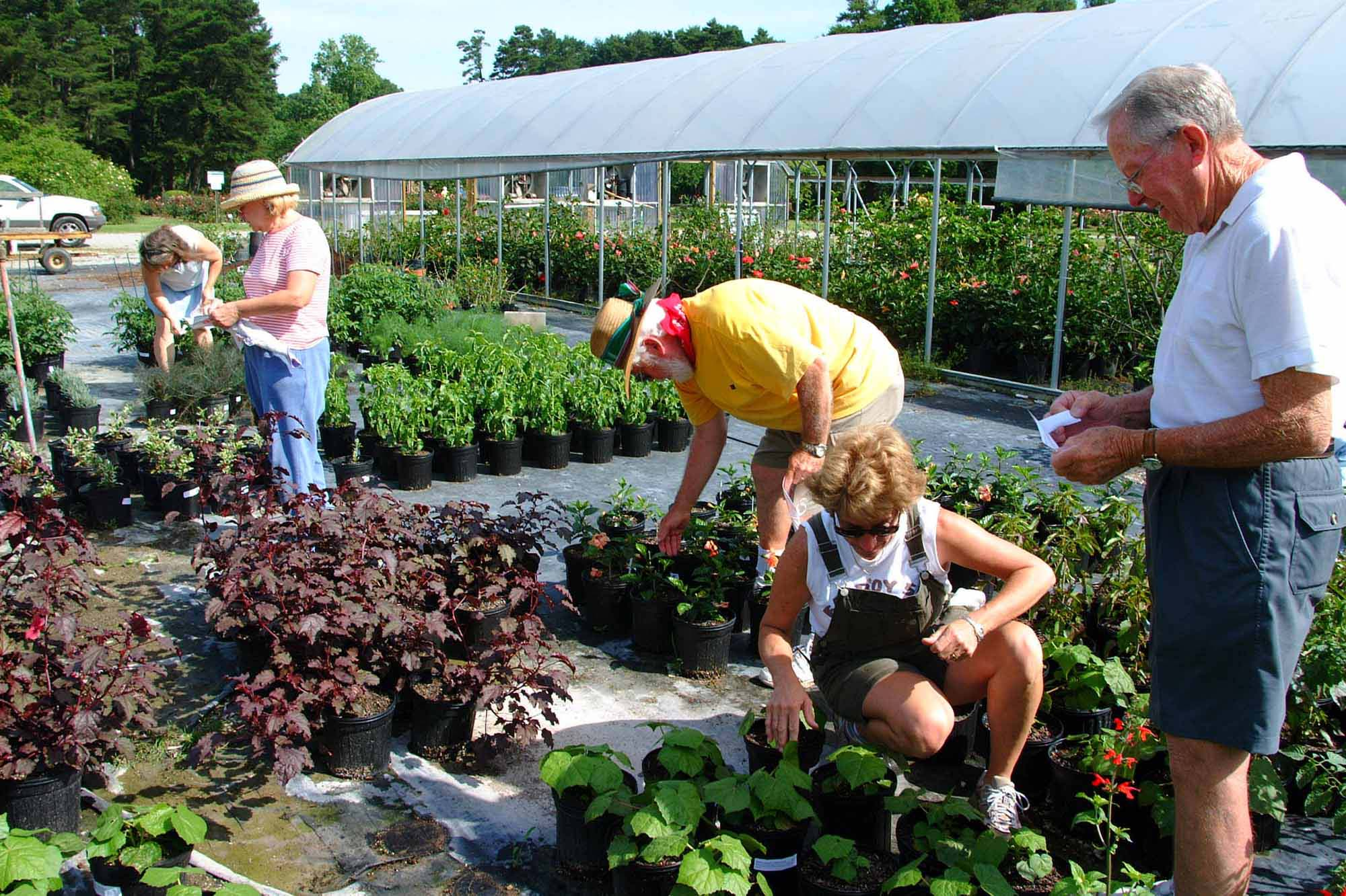 Make Friends By Growing A Garden - Stitch