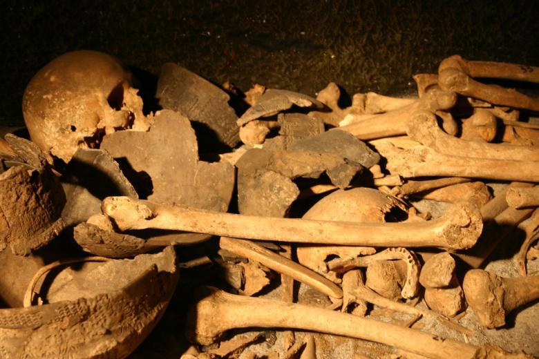 pile of bones - 780×520