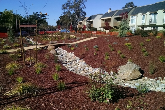 Alameda HOA Replaces Lawn with Water-Saving Landscape ...