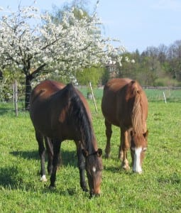 Seed Mixes for Horse Pastures: Grass, Seeds, & Herbs for ...