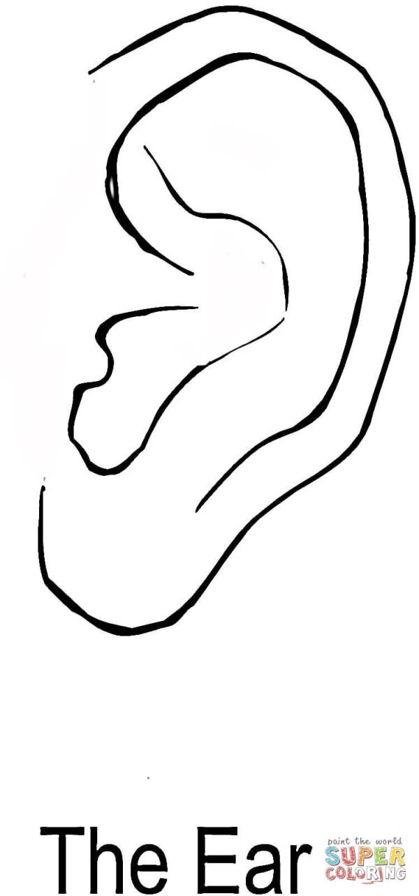 ear coloring page # 1