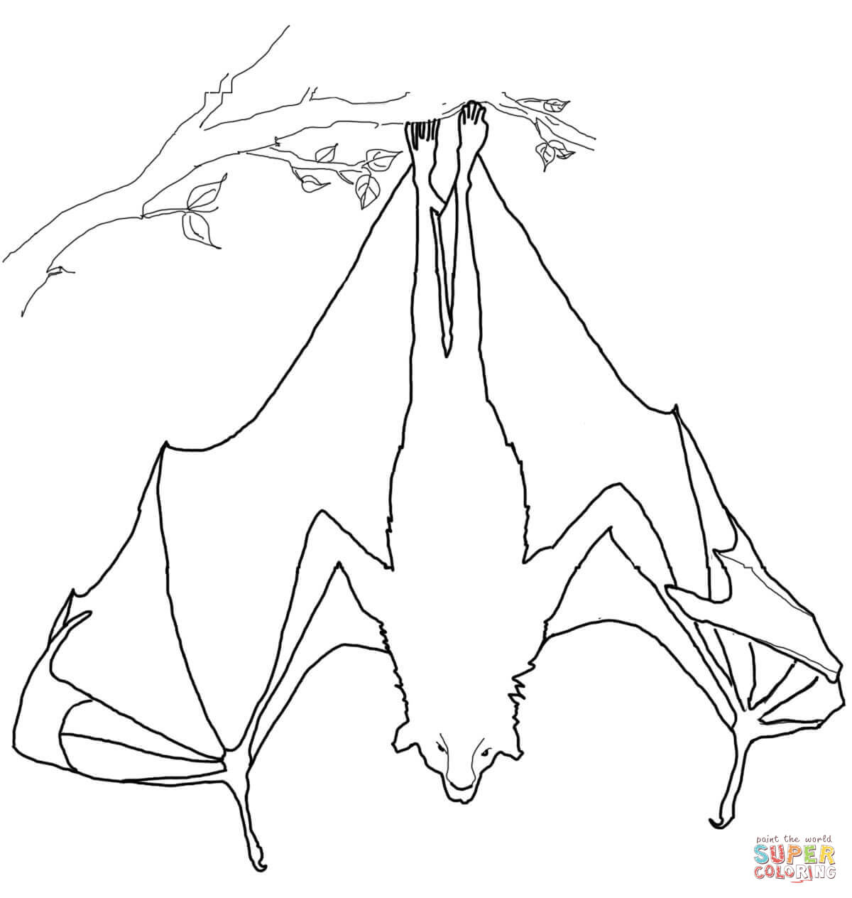 Flying Fox Coloring Page Free Printable Coloring Pages