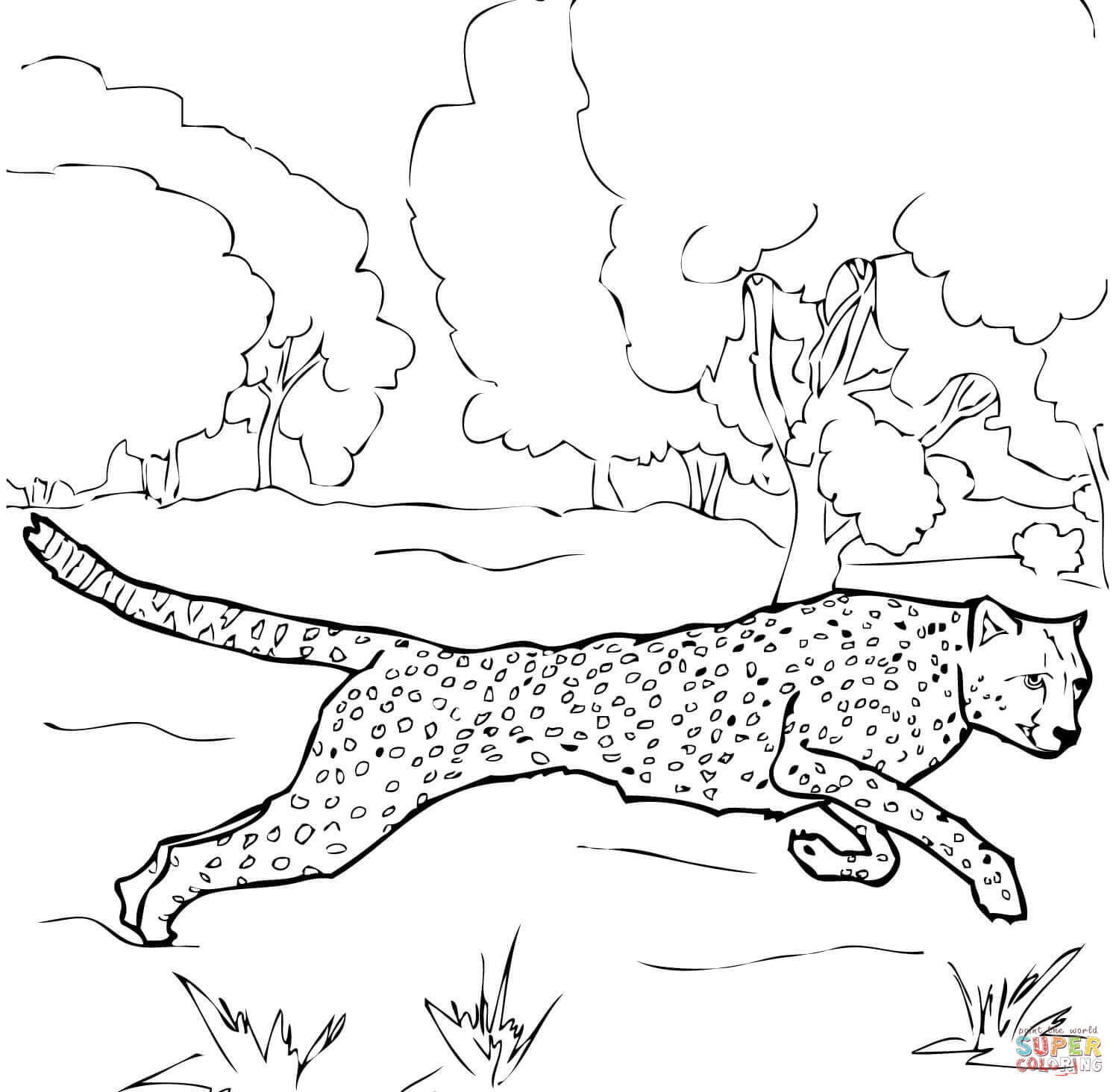 Cheetah Coloring Pages To Print Free Coloring Pages Download | Xsibe ...
