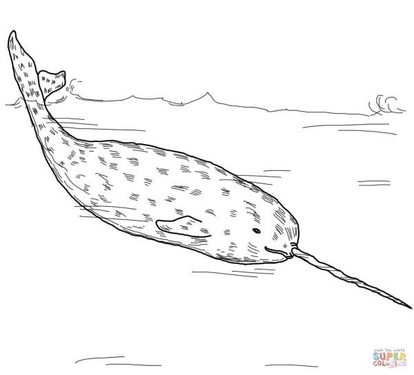 narwhal coloring page # 7