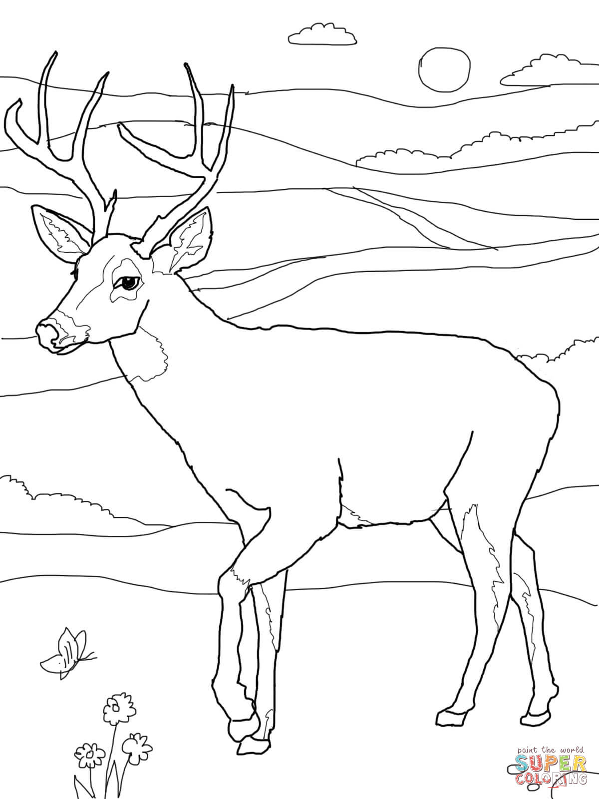White Tail Deer Coloring Page Free Printable Pages