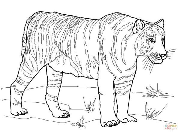 coloring pages of tigers # 0