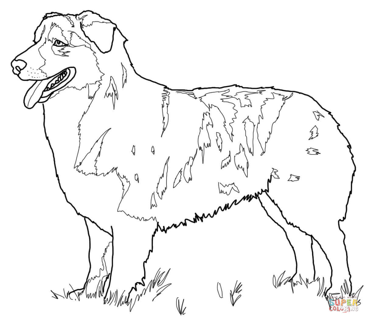 Australian Shepherd Coloring Page Free Printable Coloring Pages