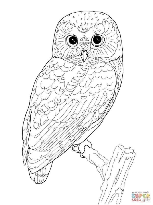 owl color pages # 17