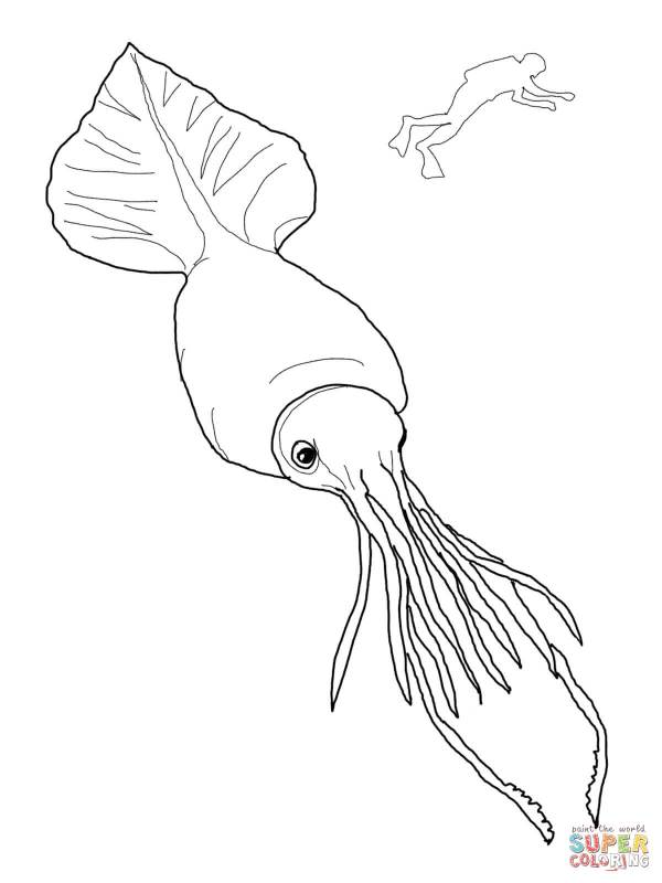 squid coloring pictures # 11