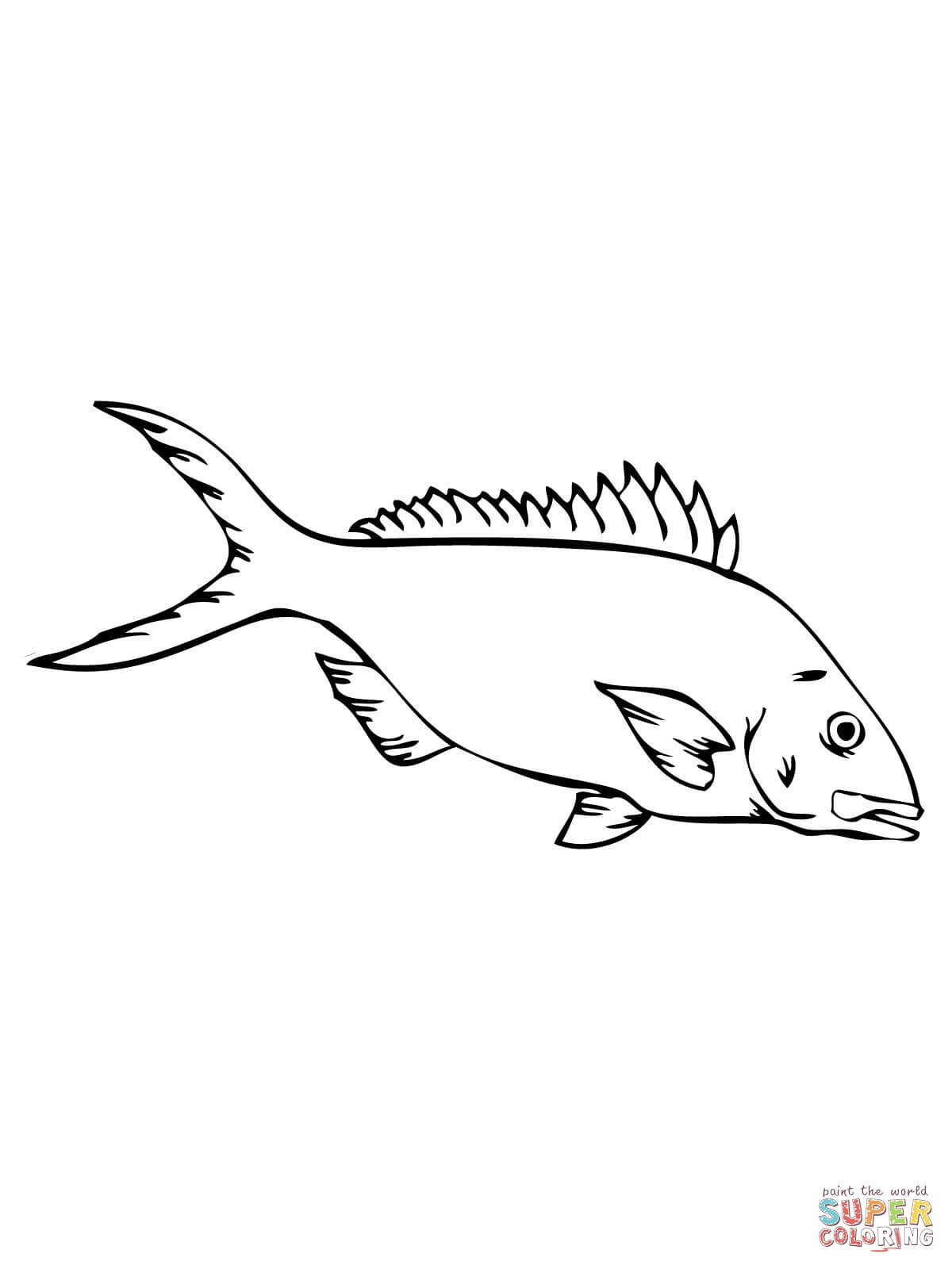 Yellowtail Barracuda Shoal Coloring Page Free Printable Coloring