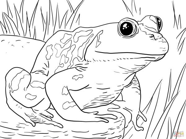 frogs coloring pages # 21