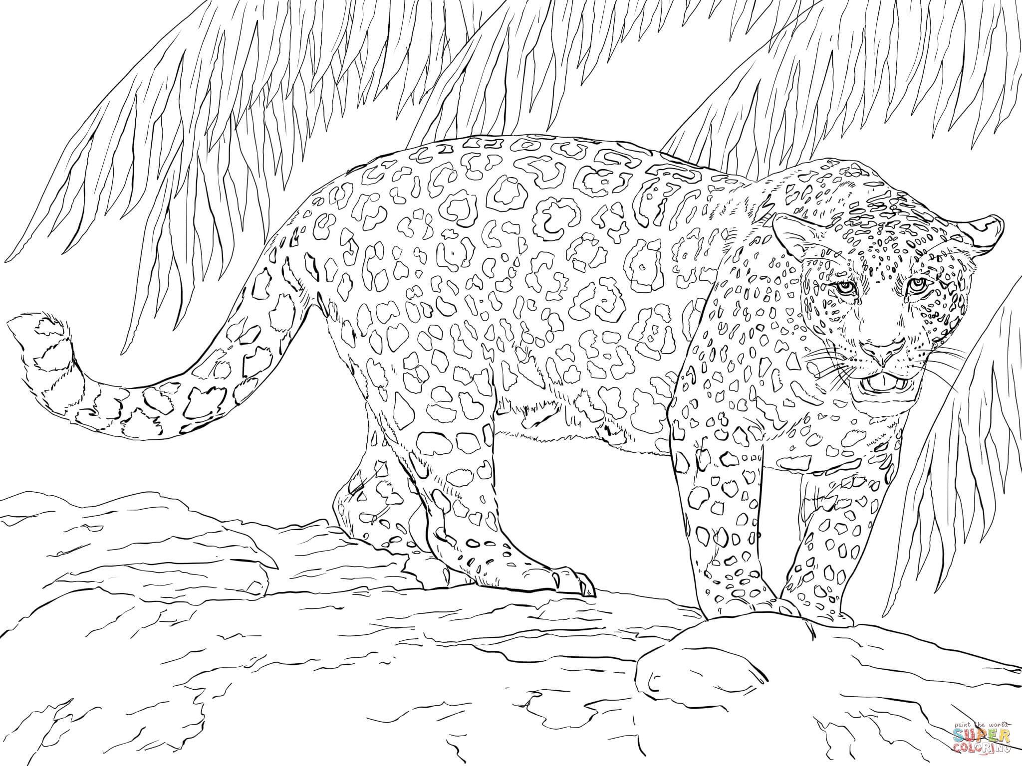 Great Jaguar Coloring Page Free Printable Coloring Pages