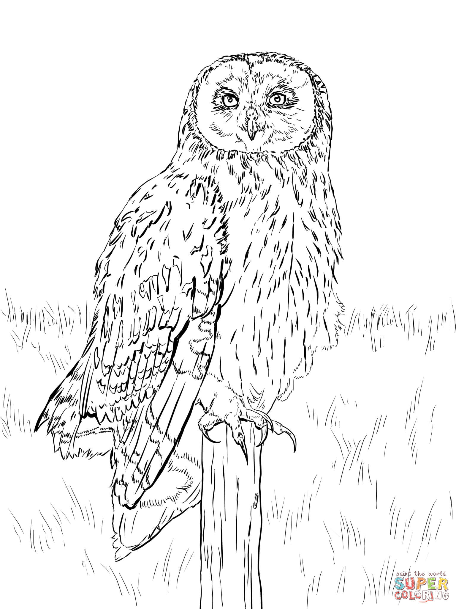 Short Eared Owl Coloring Page Free Printable Coloring Pages