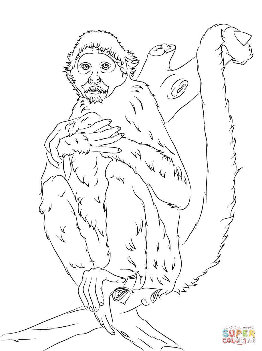 Black Headed Spider Monkey Coloring Page Free Printable Pages