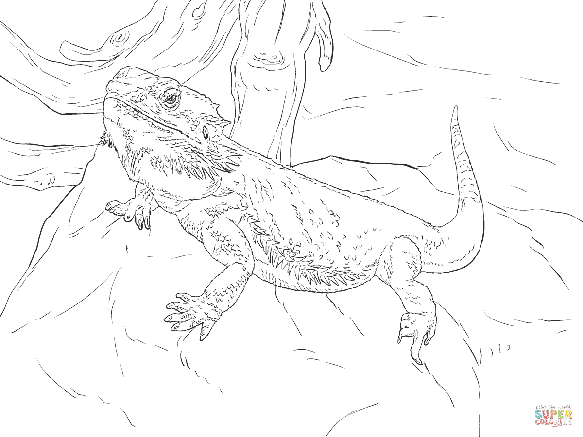 Central Bearded Dragon coloring page | Free Printable ...