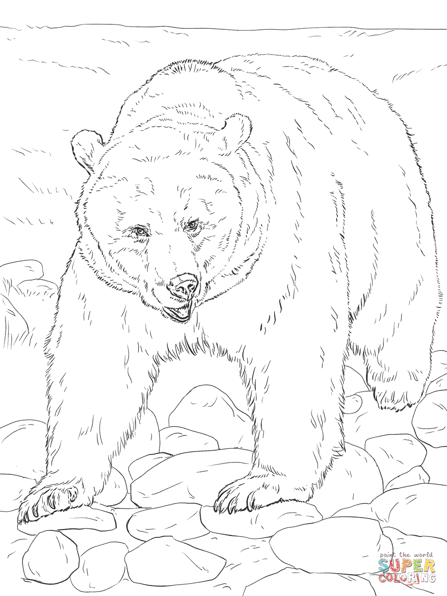Realistic Grizzly Bear Coloring Page Free Printable Coloring Pages