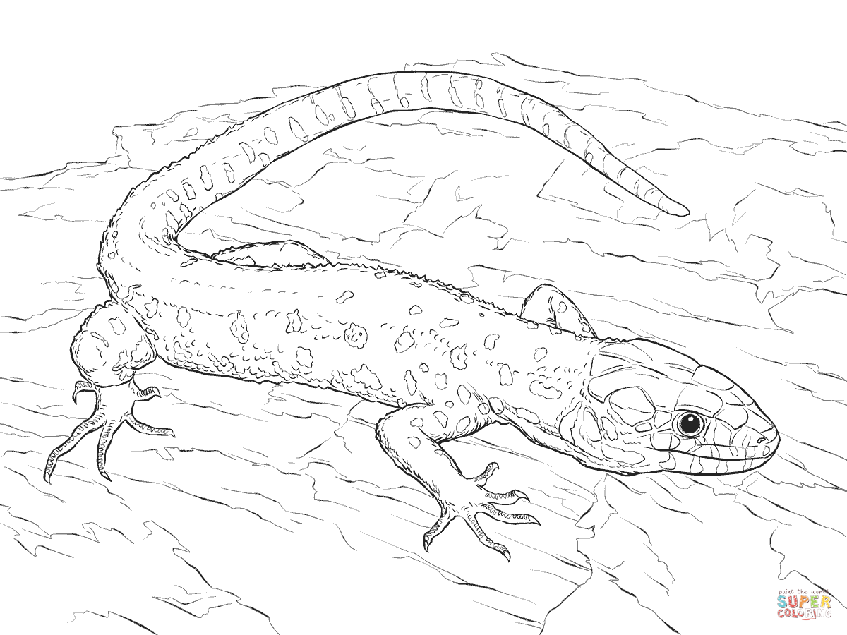 Yellow Spotted Tropical Night Lizard Coloring Page Free