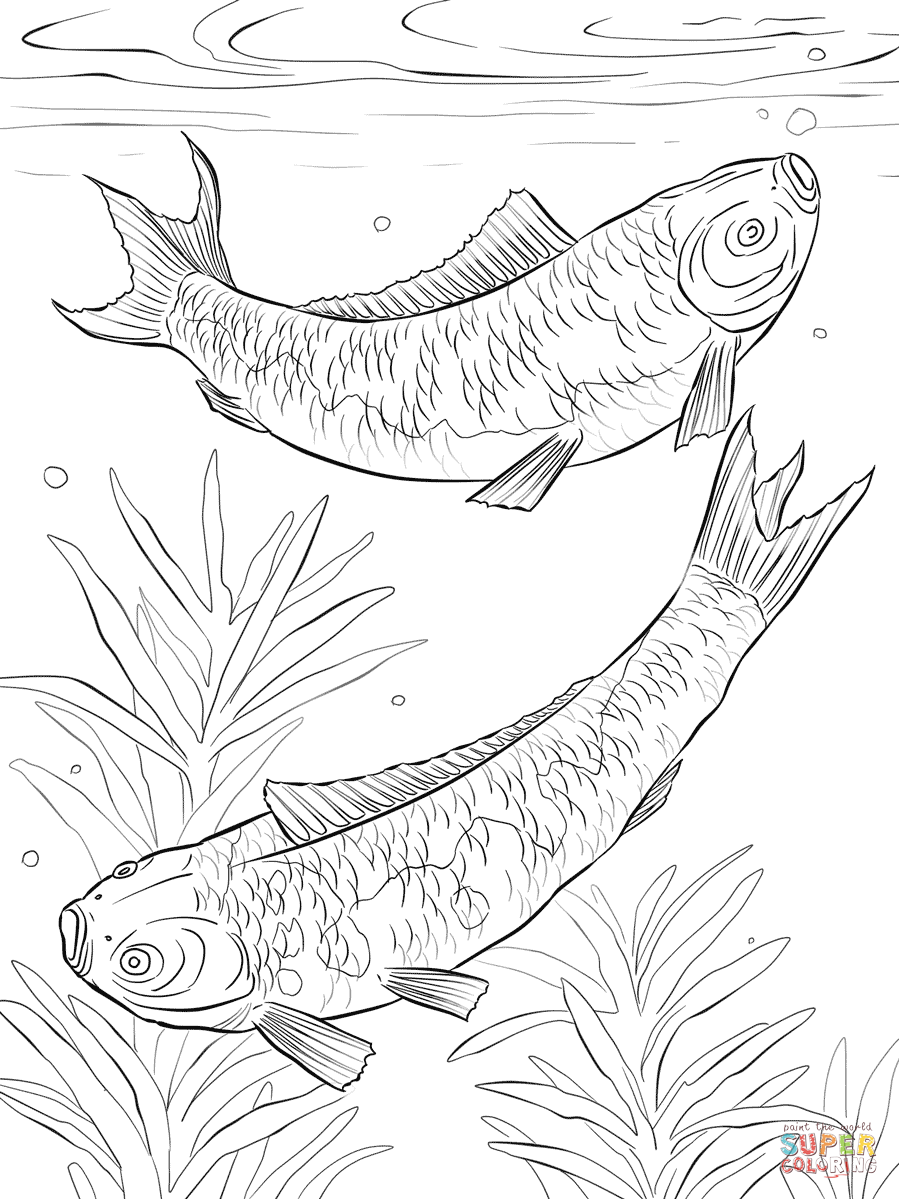 Free Coloring Pages Download Koi Fishes Page Printable Of Fish