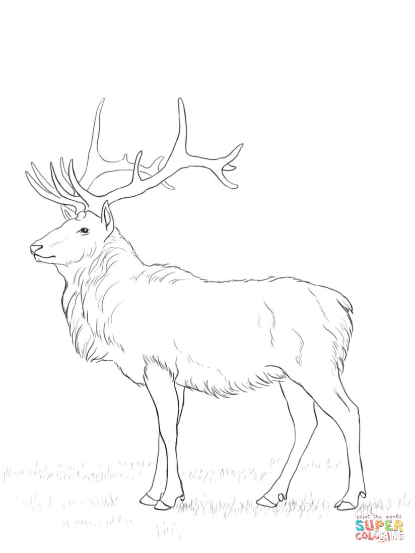 Deer Coloring Page Free Coloring Pages Download | Xsibe deer ...