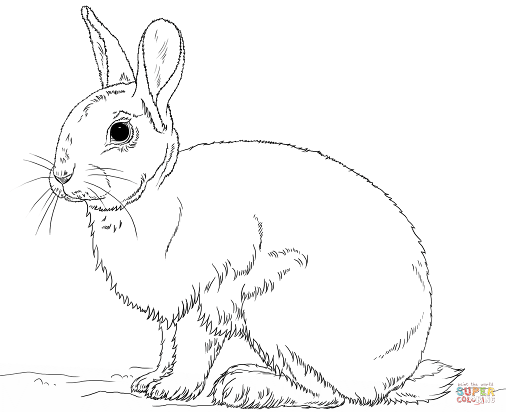 Bunny Coloring Pages Printable Free Coloring Pages Download | Xsibe ...