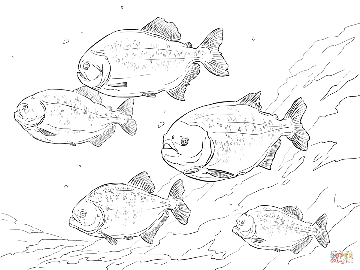 Red Bellied Piranha Shoal Coloring Page Free Printable Coloring