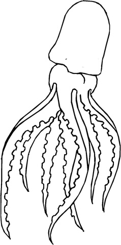 squid coloring page preschool # 3