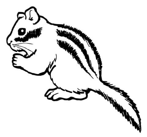 chipmunk coloring pages # 12