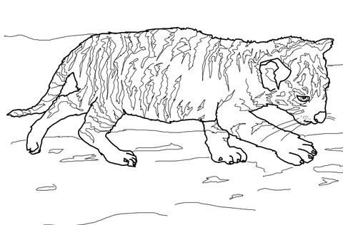 baby tiger coloring pages # 21