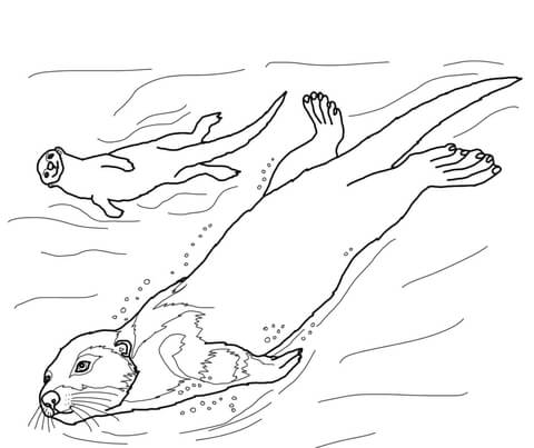 otter coloring page # 7