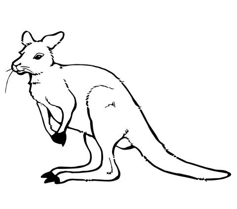 kangaroo coloring pages # 0
