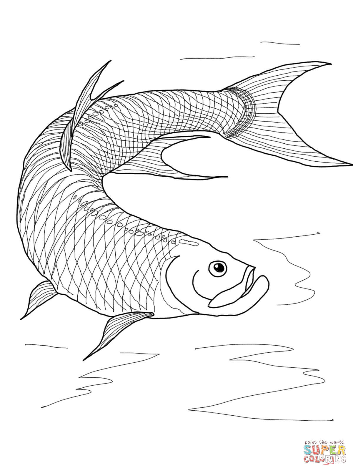 Sailfish Coloring Pages The Basking Shark Is A Very Large