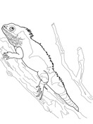 Bearded Dragon coloring page | SuperColoring.com