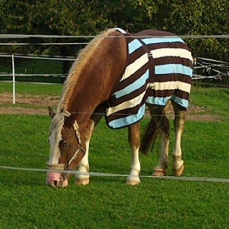 Horse & Pony / Equine Paddock Grass Seed Mix only £74.78