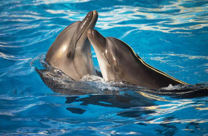 الدلافين في البحر