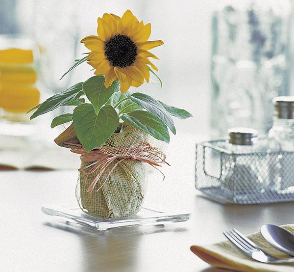 Miniature Flower Pots