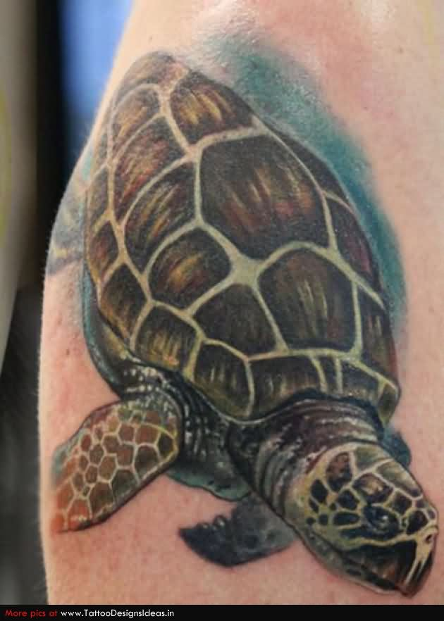 Turtle Tattoo Images Amp Designs