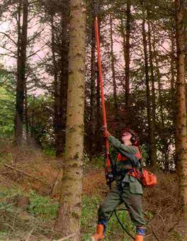 High Pruning Of Conifer And Broadleaf Trees Teagasc