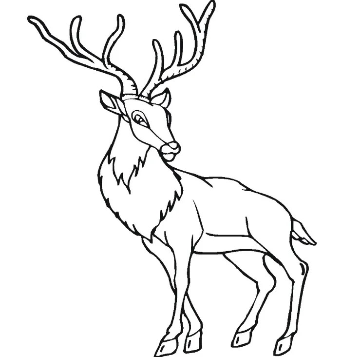 Deer template animal templates, coloring pages love
